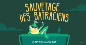 Batraciens sur nos routes – Conférence de Frédérick Bierlier le 7 février et action de ramassage